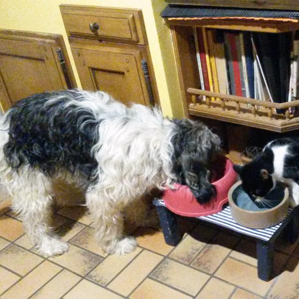 Le goût : probablement le sens le moins développé du chien