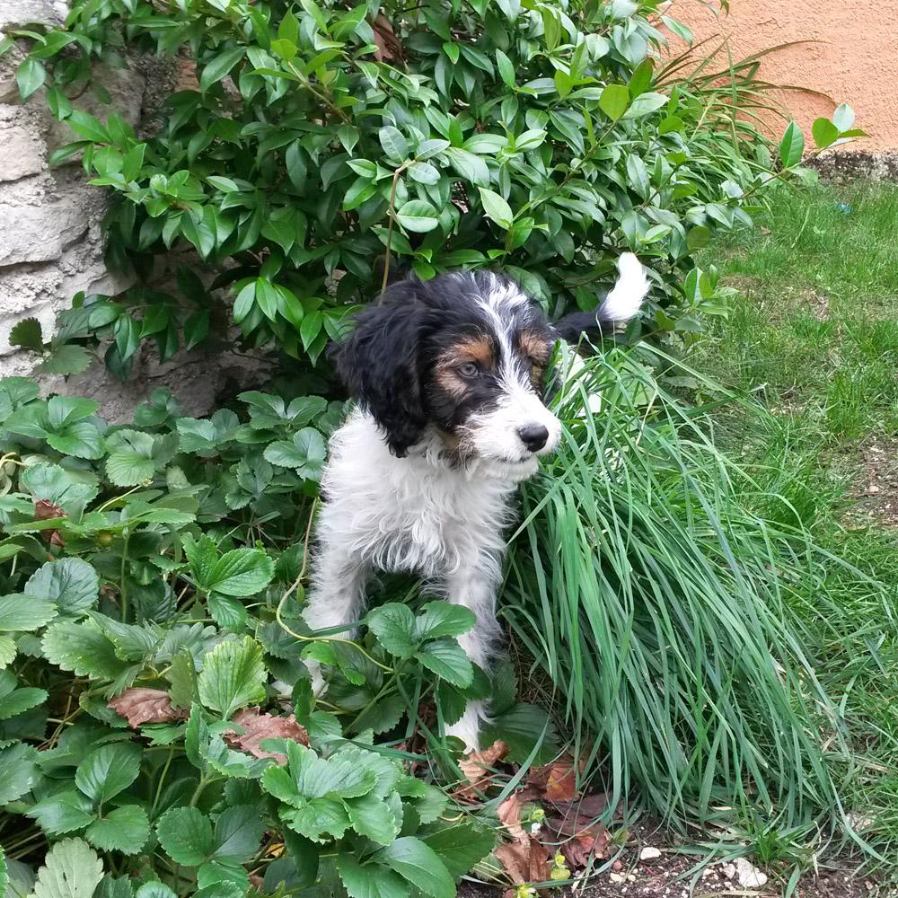Sid, 2 mois découvre le jardin
