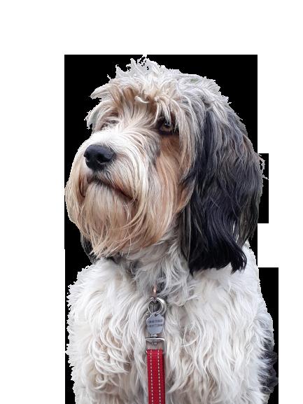 educateur canin, education canine, chien, comportement, dijon, conseil, dressage